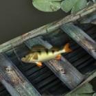 Играть Спортивная рыбалка онлайн