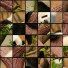 Играть Пазлы — животные онлайн